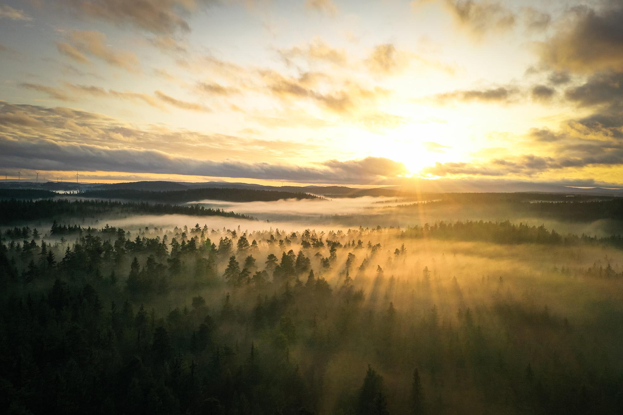 Nebel zieht durch den Selbbach-Grund