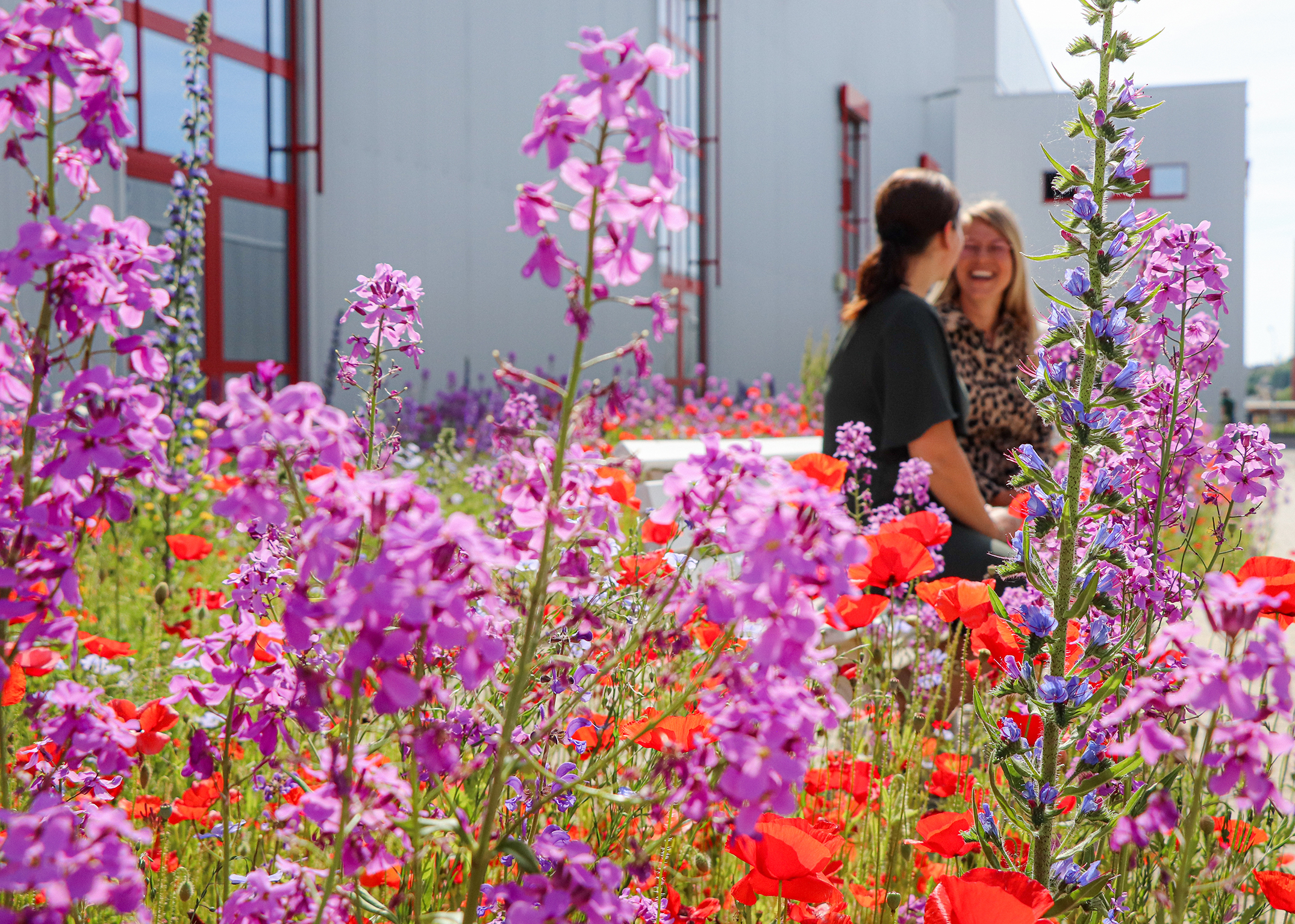 RAPA employees maintain insect protection meadow on company premises